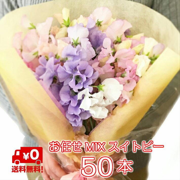 この季節に最適な スイートピー 50本 花束 送料無料 お祝い 誕生日 などの プレゼント におすすめ。無料のメッセージカード付き 女性に人気のギフト クリスマス 記念日 誕生日 結婚記念日 フラワーギフト