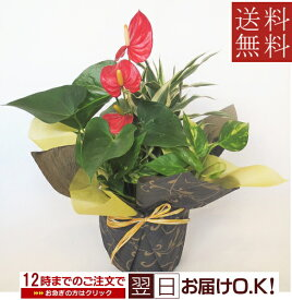 観葉植物 寄せ植え【父の日】【開店祝い】【新築祝い】【誕生日】【退職祝い】