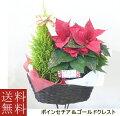 季節の鉢花寄せかご【プリンセチア】【ヒイラギ】【ゴールドクレスト】