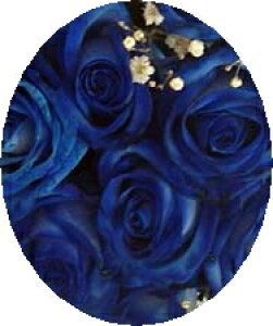 ブルーローズ・青いバラ!ブルーローズ 10本からのご注文お願いします。
