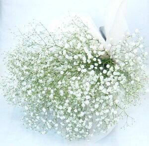 かすみそうの花束【かすみ草】【カスミソウ】