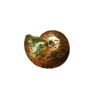 kanadianammoraito原礦石最高層等級(82-696)