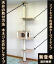 【送料無料】 キャットタワー 天井突っ張りタイプ 中央ボックスあり 棚板2枚(すべて消臭カーペットタイプ・ベージュ…