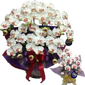 お祝い 胡蝶蘭 大輪 7本立ち ギフト プレゼント 花 鉢 おしゃれ アレンジ 百寿 造花 開店祝い 父の日 ホワイト ミディ お中元 白 ワイン ミニ 誕生日 ココキャンフラワー ラッピング 敬老の日 サロン 大きい