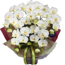 お供え 胡蝶蘭 造花 5本 光触媒 白 黄色 ホワイト イエロー 母の日
