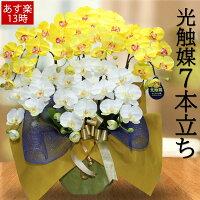 胡蝶蘭黄色サロン7本立開店祝い