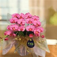 光触媒ミディ胡蝶蘭2本立選べる花全10色《送料無料/花のサイズ6cm/豪華仕様/造花/ギフト対応》