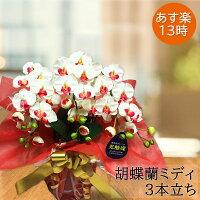 光触媒ミディ胡蝶蘭3本立選べる花全10色《送料無料/花のサイズ6cm/豪華仕様/造花/ギフト対応》