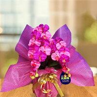 ◆光触媒ダブルカラー胡蝶蘭◆ワイン+ピンク《送料無料/花のサイズ6cm/豪華仕様/造花/ギフト対応》