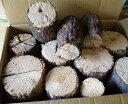 クヌギ産卵木 C規格品(約20〜40本)×1箱(数量限定)☆クワガタの産卵、カブト虫のエサ、産卵床、オオクワの産卵