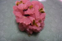 桜あんを使って春にきんとん