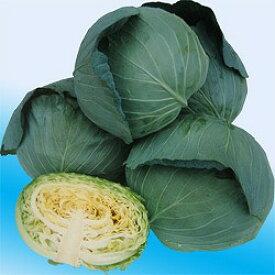キャベツ種子 渡辺農事 野菜の種 味珠(あじたま) 20ml袋