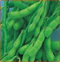 【枝豆種子】 盆錦 (武蔵野種苗園) 1L袋【野菜の種】