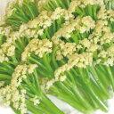 カリフローレ (トキタ種苗) 小袋(50粒) 野菜の種