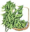 【枝豆種子】 【カネコ種苗】 湯あがり娘 枝豆 2000粒