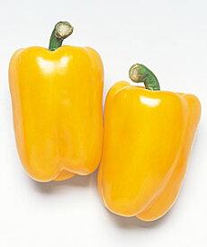 カラーピーマン種子 タキイ種苗 フルーピイエロー 小袋(30粒)