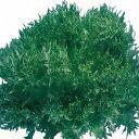 【フリルレタス種子】 ハンサムグリーン Lコート1000粒 (横浜植木) 【野菜種子】