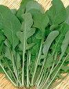 ハーブ 種 ハーブ種子 サカタのタネ ロケット(オデッセイ) 小袋