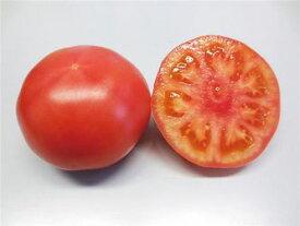 トマト種子 トキタ種苗 豊作祈願(ほうさくきがん)1103 100粒