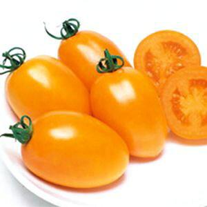 ファイトリッチシリーズ タキイ種苗 トマト種子 クックゴールド 小袋