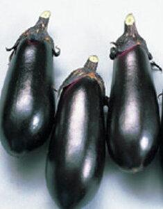 なす種子 サカタのタネ 黒福 20ml
