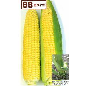 とうもろこし種子 トキタ種苗 ミルキースイーツ88ST 200粒