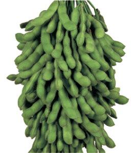 枝豆種子  雪印種苗  サッポロミドリ 70ml