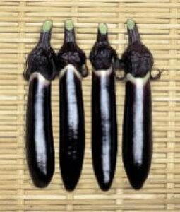 なす種子 渡辺採種場 紫紺仙台長 20ml