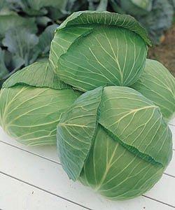 【キャベツ種子】 【タキイ種苗】 おきな 小袋