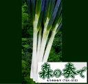 【葱種子】 【トキタ種苗】 森の奏で(TSX-515)葱 1dl