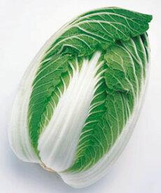 白菜種子 タキイ種苗 無双 ペレット種子150粒