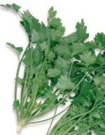 ハーブ 種 ハーブ種子 サカタのタネ パクチー (コリアンダー) 小袋