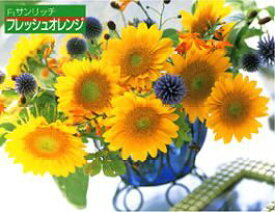 ひまわり種子 タキイ種苗 花の種 F1サンリッチフレッシュオレンジ 1000粒