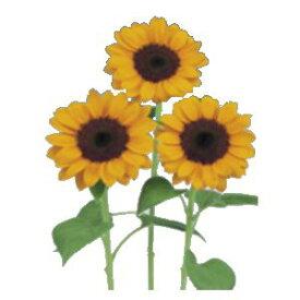 ひまわり種子 サカタのタネ 花の種 ビンセント1型 100粒 [花]