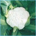 カリフラワー種子 武蔵野種苗園 ホワイトパラソル 20ml
