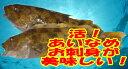 「アイナメ 約400g 1尾 約20cm」活魚神経〆!お刺身用 あいなめ 北海道産   【smtb-TK】【smtb-tk】【k】   【…