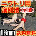 識別環・ニワトリ・大型キジ類用割り環 4色20個入り【16mm】