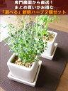 【送料無料】 観葉植物 おしゃれ インテリアハーブ お得セット ハーブ 2セット 専門農家から良質ハーブを直送 鉢植え インテリア キッ…