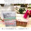 パキラ/화 초/화분/퍼펙트 서클/화이트 인테리어/미니/화분/도자기 선물/생일/풍수
