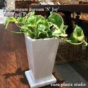 【送料無料】 観葉植物 ポトス エンジョイ 観葉植物 鉢植え 高さ20cm程度 白 スクエア トール モダン 陶器 受け皿付き 【陶器 デスク …
