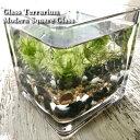 【送料無料】水草 テラリウム キット 角グラス 10cm アクアリウム 人気水草3種入り 麦飯石と竹炭入り 砂利付き ガラス…