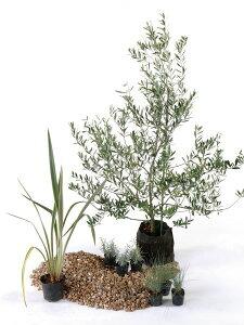 ドライ 日なた セットアップガーデン ハーブ 植木 苗 庭木 セット商品