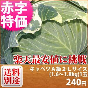 【特別栽培】 キャベツ A級良品 2Lサイズ(1.4〜1.8kg)1個■減農薬減化学肥料栽培