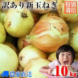 【送料無料】【訳あり】特別栽培 新玉ねぎ 10kg 農家直送 減農薬 選べるサイズ[新玉葱 新タマネギ 新玉ネギ 新たまねぎ]