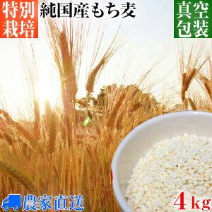 【送料無料】 国産 もち麦 キラリモチ 特別栽培 減農薬栽培 真空パック 令和2年度産 4kg [ もちむぎ モチ麦 モチムギ 雑穀 大麦 きらりもち キラリもち]