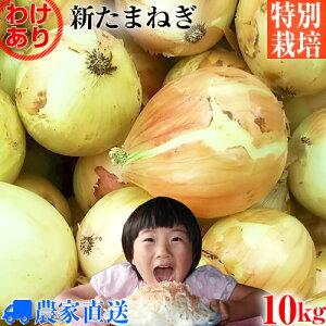 【送料無料】【訳あり】特別栽培 新玉ねぎ 10kg 農家直送 減農薬 選べるサイズ [ 新玉葱 新タマネギ 新玉ネギ 新たまねぎ 玉ねぎ たまねぎ ]