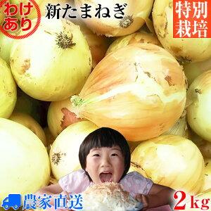 【送料無料】【訳あり】特別栽培 新玉ねぎ 2kg 農家直送 減農薬 選べるサイズ [ 新玉葱 新タマネギ 新玉ネギ 新たまねぎ 玉ねぎ たまねぎ ]
