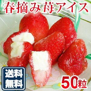 残暑見舞い アイスクリーム スイーツ アイス ギフト 送料無料 春摘み苺アイス(50粒)