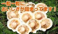 ホタテほたて片貝【生冷凍帆立【ほたて】/ホタテ・10枚】焼肉焼き肉バーベキューBBQ