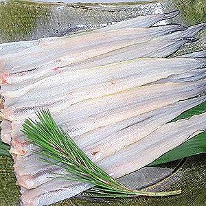 あなご 穴子 フィレ【約50〜60g×10枚入りアナゴ】冷凍食品 食品 業務用 家庭用 ご飯のお供 魚介 国産